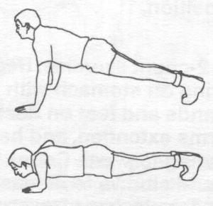 Regular Push Up